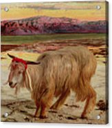 The Scapegoat Acrylic Print by William Holman Hunt