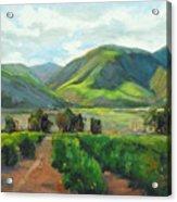 The Scent Of Citrus - Santa Paula Citrus Grove Central Coast Landscape Acrylic Print