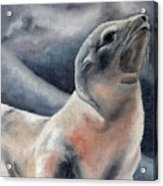 The Seal Acrylic Print
