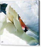 The Seductive Swan Acrylic Print