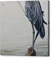 The Sentinel - Portrait Of A Great Blue Heron Acrylic Print