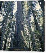 The Shenandoah National Forest Acrylic Print