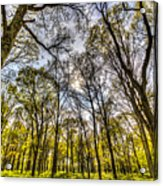 The Silent Forest  Acrylic Print