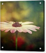 The Simple Beauty  Acrylic Print