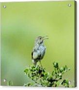 The Singing Birdie  Acrylic Print