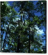 The Skyline Of Susan Creek Indian Mounds Acrylic Print