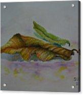 The Sleeping Leaf Acrylic Print