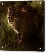 The Sleepy Wild Cat Acrylic Print