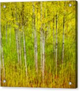 The Small Forest Acrylic Print