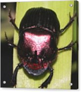 The Smiling Beetle Bug-debbie-may Acrylic Print