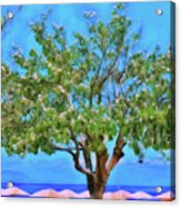 The Smiling Tree Of Benitses Acrylic Print
