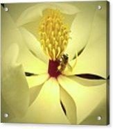 The Southern Magnolia Acrylic Print