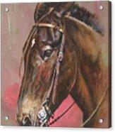 The Spanish Mule Acrylic Print