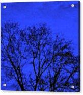 The Sparkle Tree Acrylic Print
