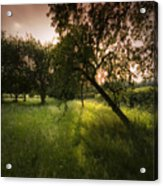 The Spring Orchard Acrylic Print