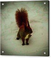 The Squirrel In The Winter Garden Acrylic Print