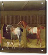 The Stables And Two Famous Running Horses Belonging To His Grace - The Duke Of Bolton Acrylic Print