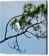 The Stoic Egret - Debbie May Acrylic Print