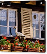 The Stork Has A Delivery - Colmar France Acrylic Print