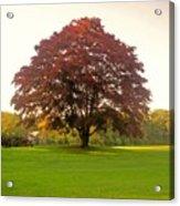 The Storybook Tree Acrylic Print