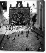 The Street Pigeons Acrylic Print by Perry Webster