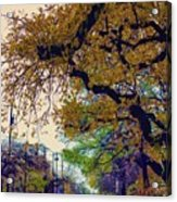 The Street Trees Acrylic Print