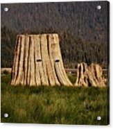 The Stumps Have Eyes Acrylic Print