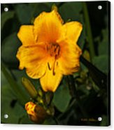 The Summer Blooms Acrylic Print