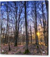 The Sun Ray Forest Acrylic Print