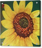 The Sunflower In Our Garden Acrylic Print