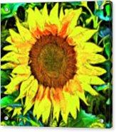 The Sunflower Acrylic Print