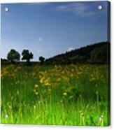 The Sunny Meadow Acrylic Print