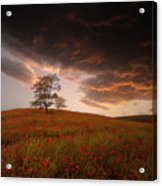 The Sunset Of The Poppies - 2 Acrylic Print