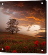The Sunset Of The Poppies Acrylic Print