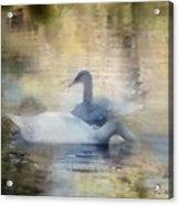 The Swans Acrylic Print