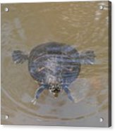 The Swimming Turtle Acrylic Print