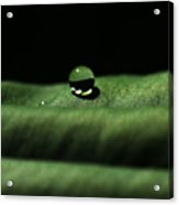 The Tao Of Raindrop Acrylic Print