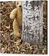 The Teddy Bear In The Woods Acrylic Print