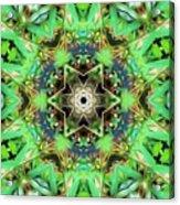 The Terrapin Star Acrylic Print