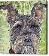 The Terrier Acrylic Print