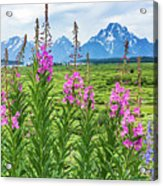The Tetons Are Grand Acrylic Print