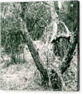 The Thinking Tree Acrylic Print