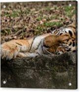 The Tiger's Rock  Acrylic Print