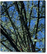 The Top A Glowing Tree Acrylic Print