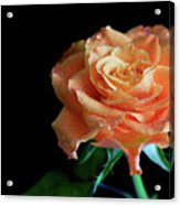 The Touch Of A Rose Acrylic Print by Tracy Hall