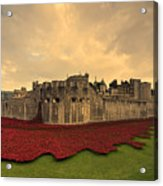The Tower Poppies  Acrylic Print
