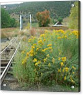 The Tracks At Pagosa Junction Acrylic Print