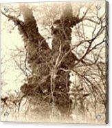 The Tree - Sepia Acrylic Print