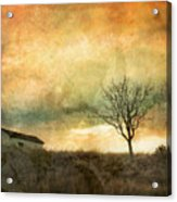 The Tree And The Roof Top Acrylic Print