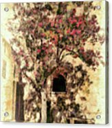 The Tree In The Corner Of The Courtyard Acrylic Print